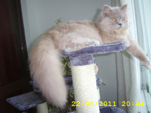 http://britanica-cat.ru/images/300.jpg